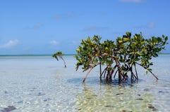 热带的天堂 免版税库存照片
