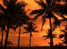 热带的天空 库存照片