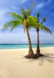 热带的夫妇 免版税库存照片