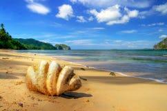 热带的孑然 库存照片