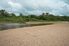 热带的密林 图库摄影