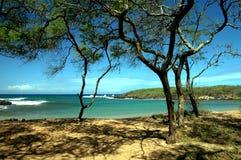 热带的小海湾 免版税图库摄影
