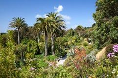 热带的庭院 图库摄影