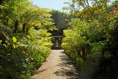热带的庭院 库存照片