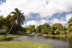 热带的庭院 免版税图库摄影