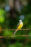 热带的必胜鸟 免版税图库摄影