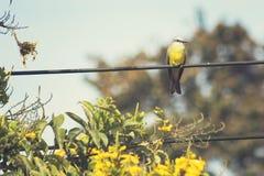 热带的必胜鸟 免版税库存图片