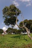 热带的房子 免版税库存图片