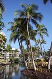 热带的手段 库存图片