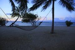 热带的手段 库存照片