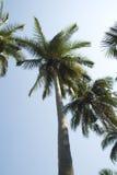 热带的掌上型计算机 库存照片