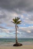 热带的掌上型计算机 免版税图库摄影