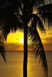 热带的日出 图库摄影