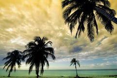 热带的日落 免版税图库摄影