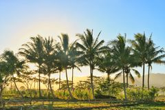 热带的早晨 免版税库存图片