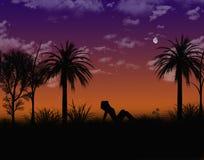 热带的晚上 库存照片