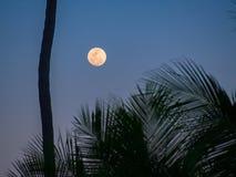热带的月光 免版税库存照片