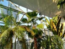 热带的棕榈树 免版税库存图片