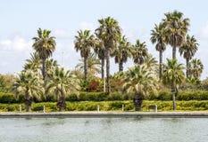 热带的棕榈树 免版税图库摄影