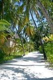 热带的森林 免版税库存图片
