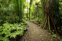 热带的森林 库存照片