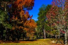 热带的森林 库存图片