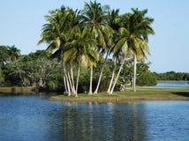 热带的植物园 免版税图库摄影