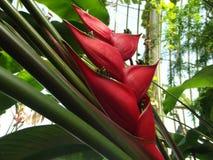 热带的植物群 免版税库存照片