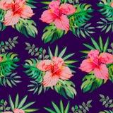热带的模式 木槿, monstera叶子,棕榈 图库摄影