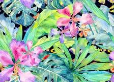 热带的模式 水彩泰国棕榈, monstera,木槿,香蕉树 皇族释放例证