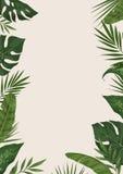 热带的模板 免版税库存图片