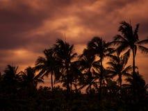 热带的横向 图库摄影