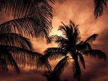 热带的横向 库存图片