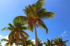 热带的横向 免版税库存图片