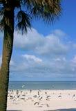 热带的欢欣 免版税库存照片