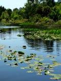 热带的池塘 库存照片