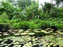 热带的池塘 库存图片