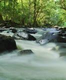 热带的河 免版税库存图片