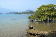 热带的海运 库存照片