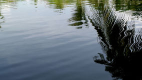 热带的湖 库存照片