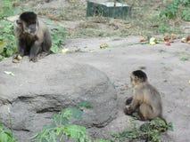 热带的片断在基辅动物园里 免版税图库摄影