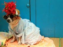 热带的狗 图库摄影