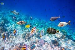 热带的珊瑚礁 免版税库存照片