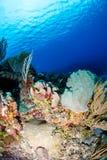 热带的珊瑚礁 库存图片