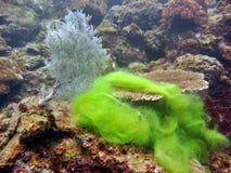 热带的礁石 免版税图库摄影