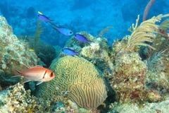 热带的礁石 图库摄影