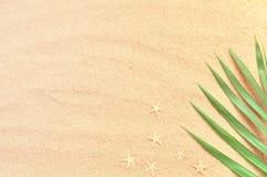 热带的背景 与海星的棕榈树分支在含沙背景 旅行 复制空间 库存图片