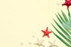 热带的背景 与海星的棕榈树分支在轻的背景 旅行 免版税库存图片