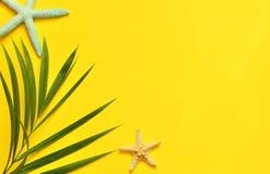 热带的背景 与海星的棕榈树分支在黄色背景 旅行 库存图片