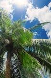 热带的背景 棕榈叶 库存照片
